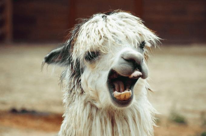 Unfriending Alpaca Farmers
