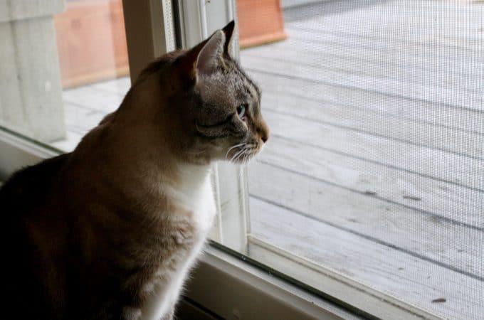 Cat T.V.