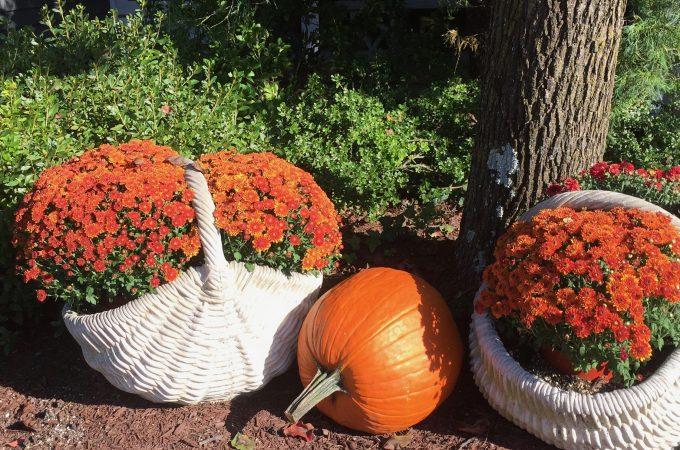 Fall Has Finally Arrived