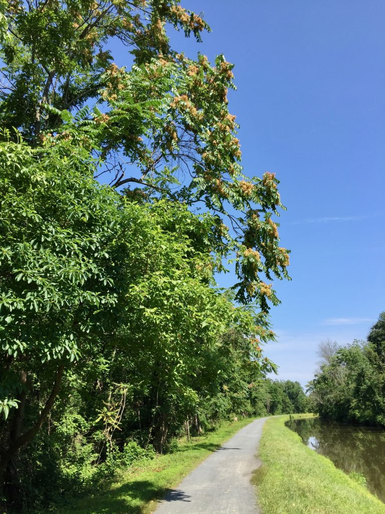 Canal Towpath 07-19-19 01