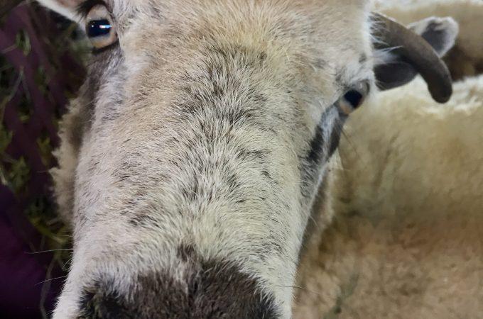 NJ Sheep & Wool AND Men's Knitting Retreat Openings!