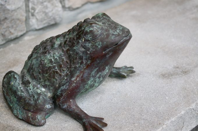 Foto-February – Day 11 – Garden Frog