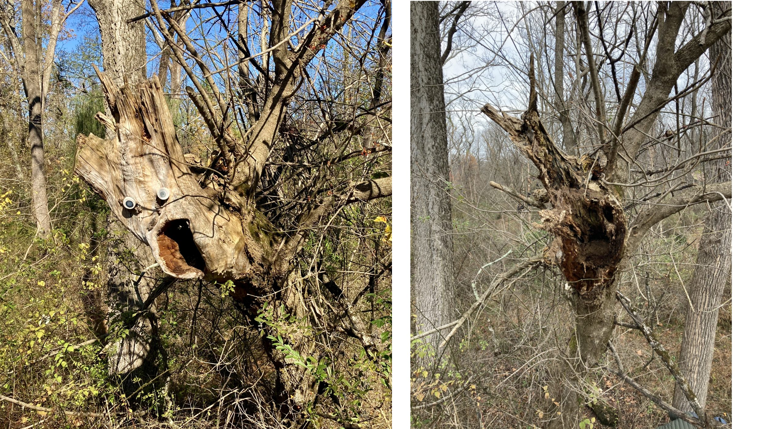 Local Art Disaster - Screaming Tree Before and After
