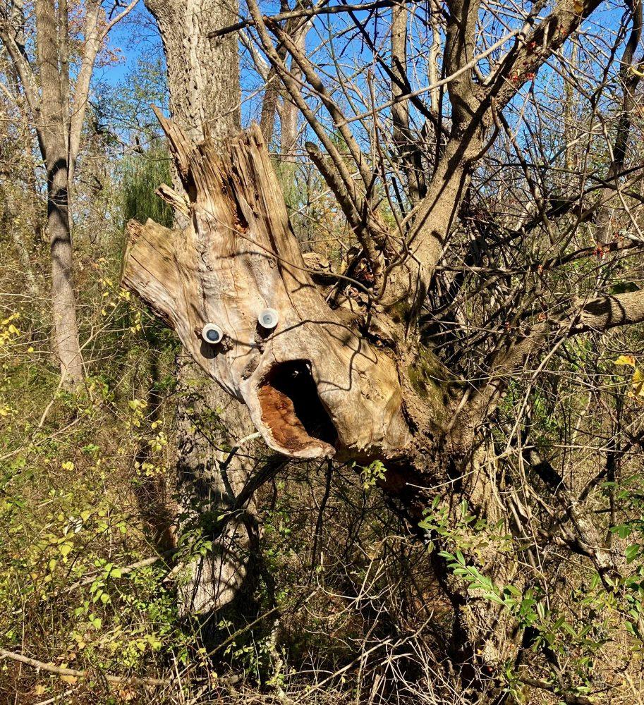 Open-Source Artwork - Screaming Tree 11-08-20 -1