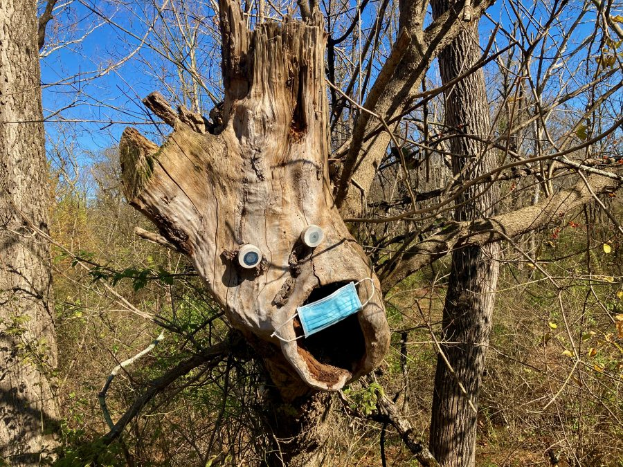 Screaming Tree 11-08-20 -2