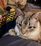 Finn Helping Me Test Knit Sankofa Cowl 01-04-20 01