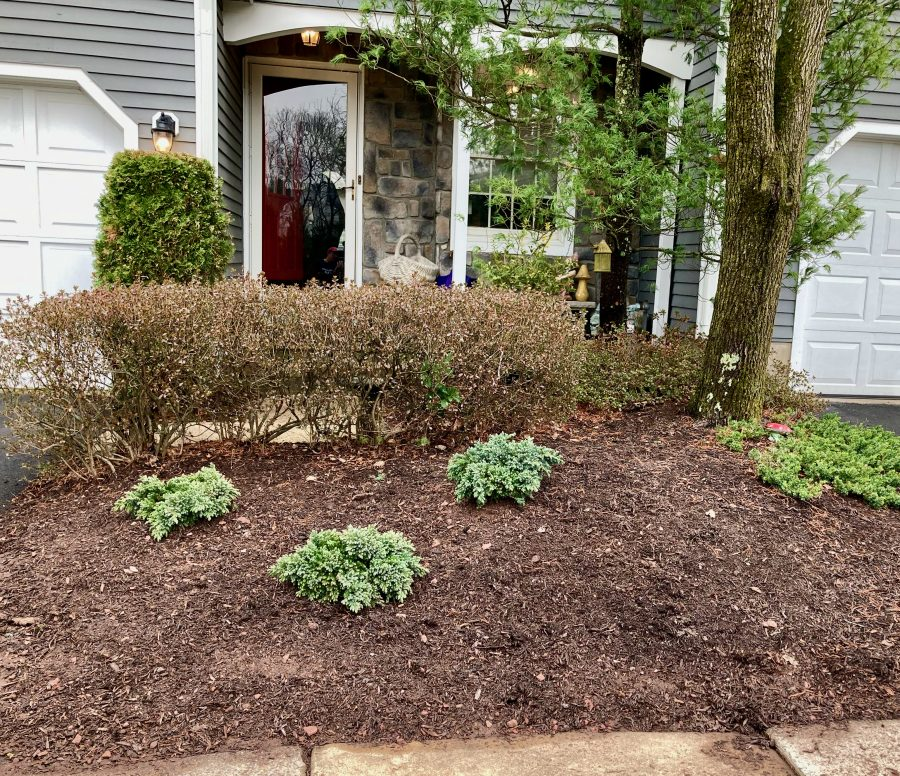Front Yard 03-25-21 01