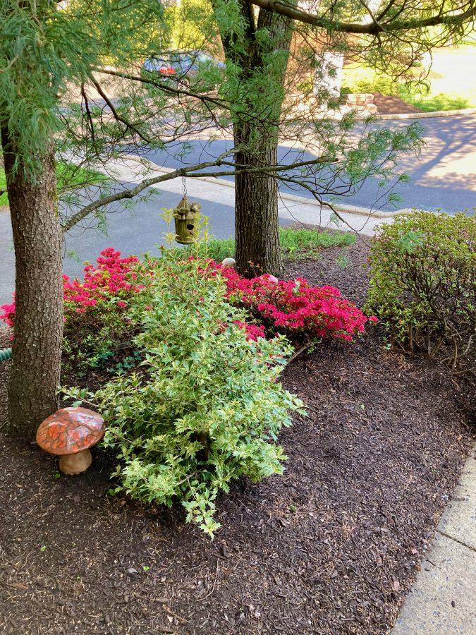 Secret Garden - Front Yard 04-27-21 21