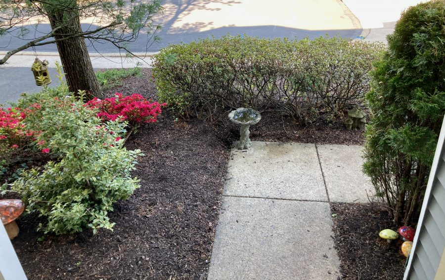 Front Yard 04-27-21 22
