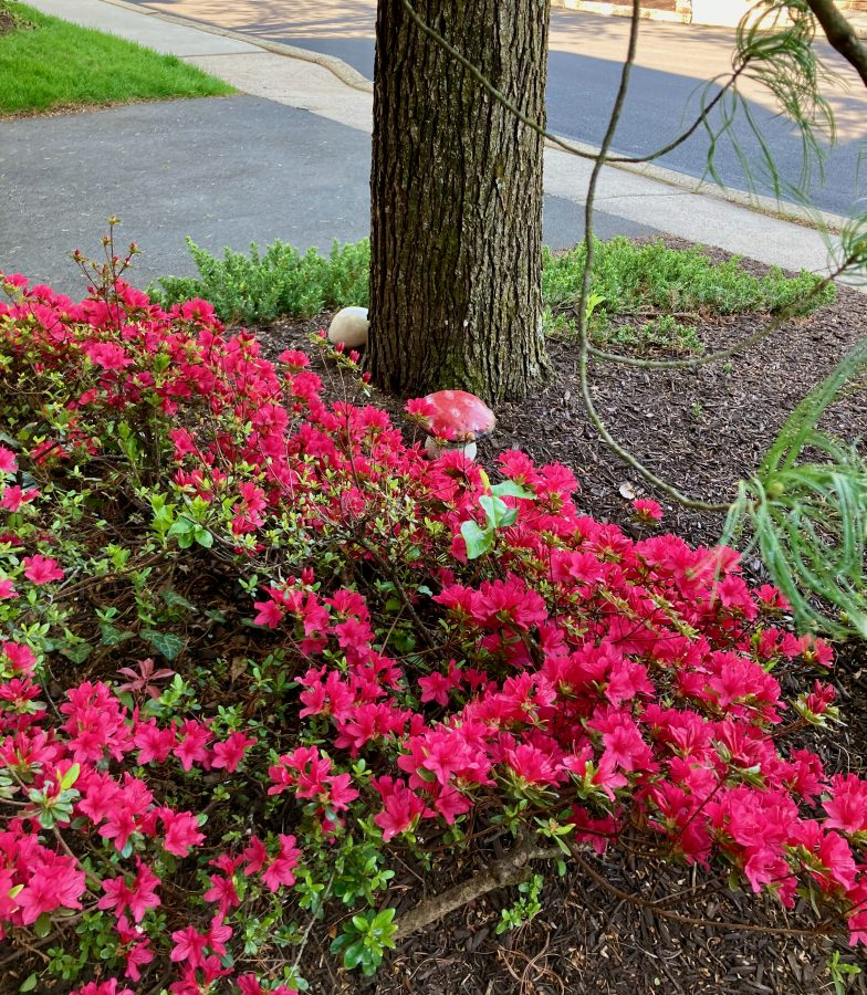 Front Yard 04-27-21 24