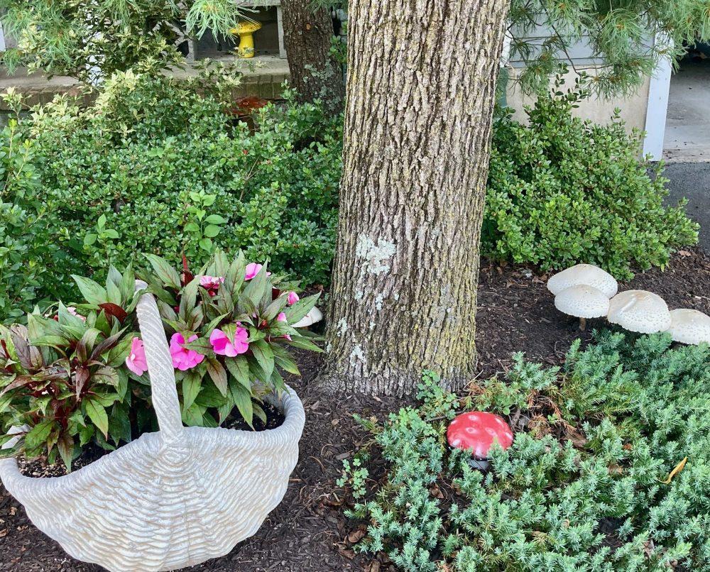 Mushroom Decoys - Cholorphyllum-Molybdites 08-05-21 01