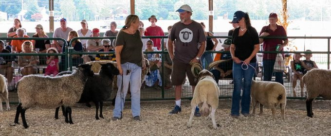 NJ Sheep & Wool Festival!