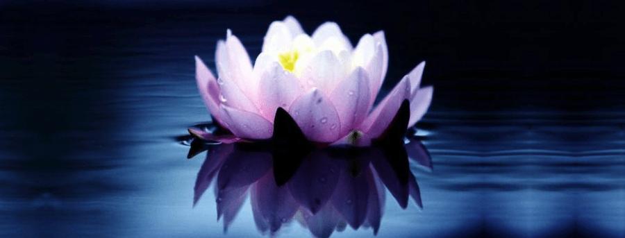 Spiritual Pursuits - lotus floating
